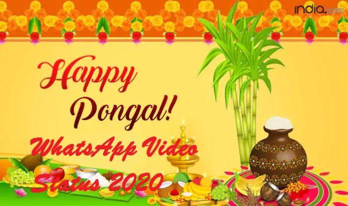 Pongal WhatsApp video status 2020 download